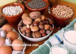 proteinas-dieta-vegetariana